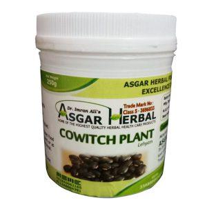 Cowitchi-Plant-Lehyam